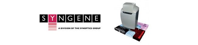 Syngene G:BOX Gel Documentation and Analysis